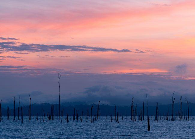 Pink Hues | Photo: Rafael Jantz