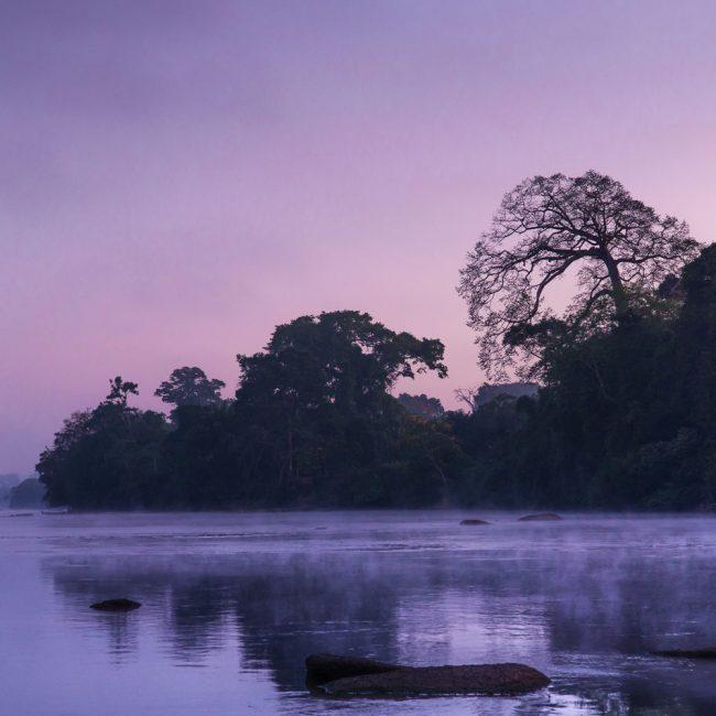 Violet Mist | Photo: Rafael Jantz